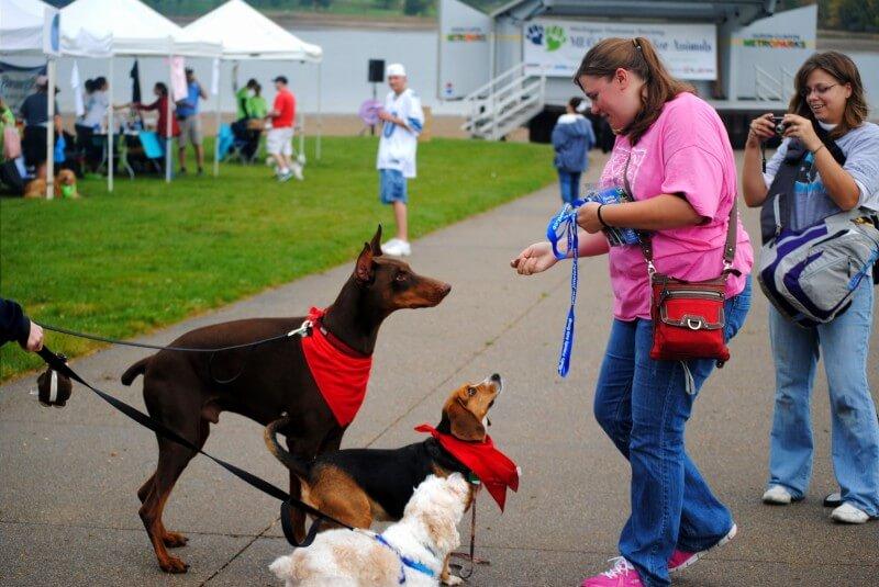 Canine companions 002