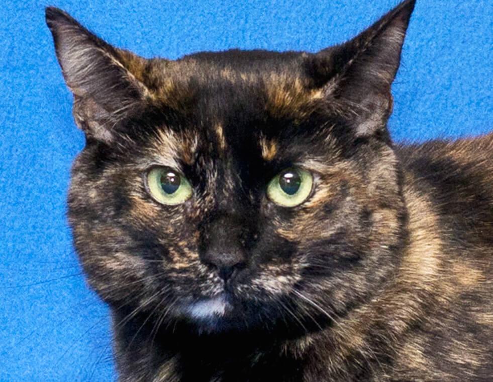 cattie-big-791550-0025