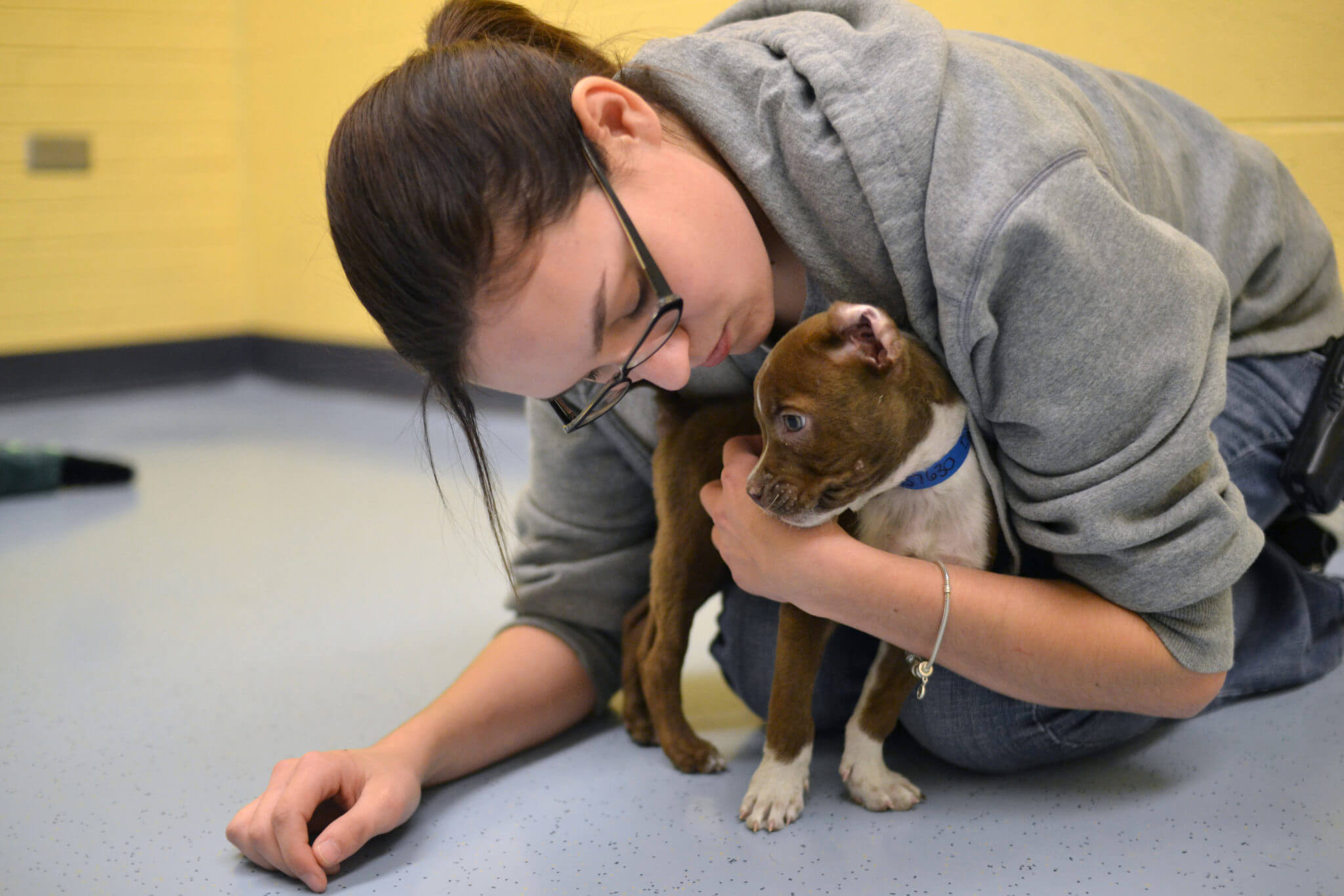 Our hard working staff cares greatly for each animal that comes through our doors.