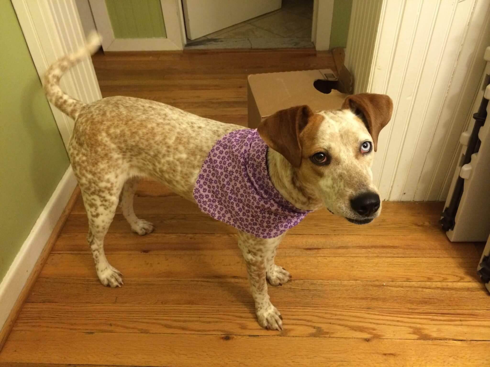 Libby in Purple3