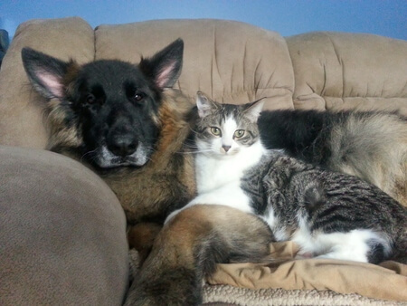 Zeus and Chevy were friends from the moment Chevy came home after being adopted.