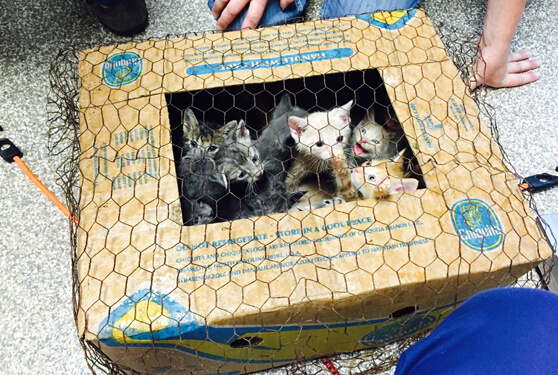 kittenbigger