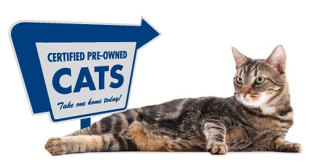 Certified-preowned-cats-jpg