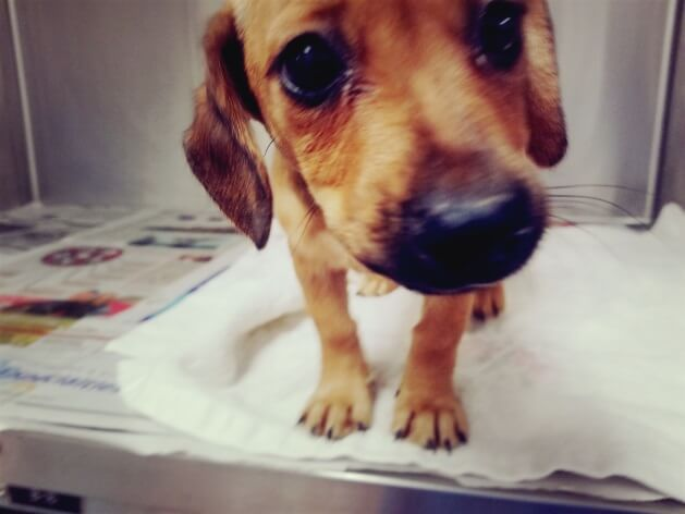 puppy houston