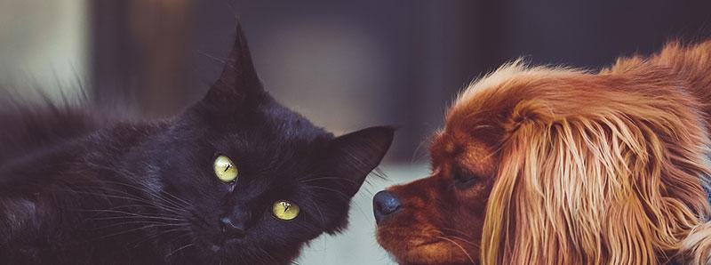 Animal Surrender - Michigan Humane Society