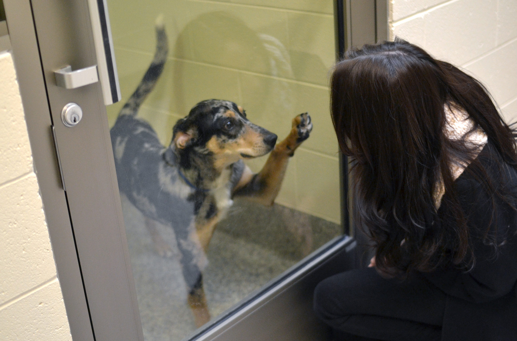 Animal Shelters - Adopt A Pet - Michigan Humane Society