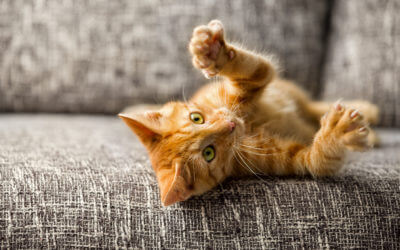 New York Becomes First U.S. State to Ban Declawing Cats