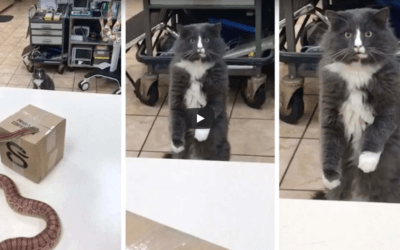 Cat Sees Snake for the First Time and Can't Comprehend