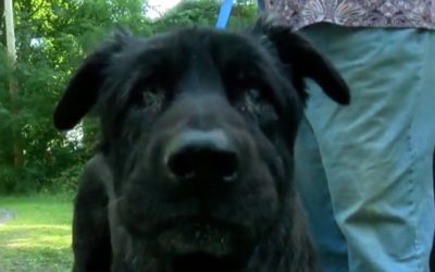 Dog Rescued After Falling 20 Feet Into Creek