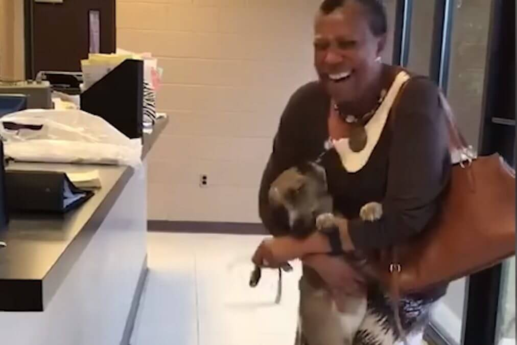 Lost Dog Reunites With Human Mom, Happy Dance Ensues