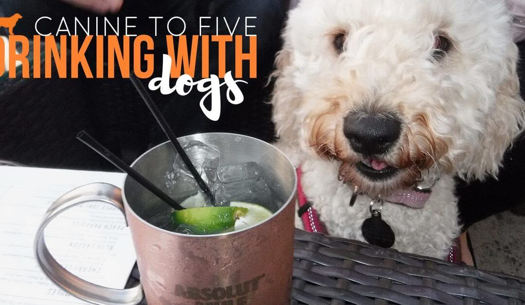 Drinking with Dogs Presented by Canine to Five