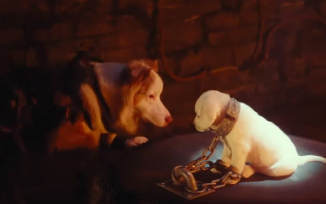 Watch a Tomb Raider Trailer Starring Cats and Dogs