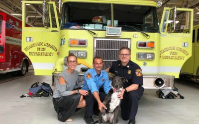 The Kibble: Dog Goes from Firehouse to Forever Home