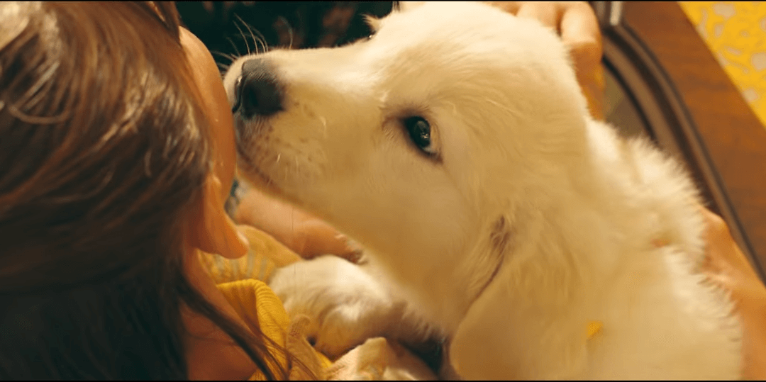 Watch a Girl and Her Dog's Emotional Bond in Marshmello's 'Happier' Video