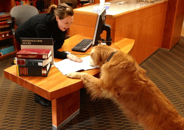 Dog studying.