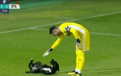 Dog Invades Soccer Game and Wants Belly Rubs
