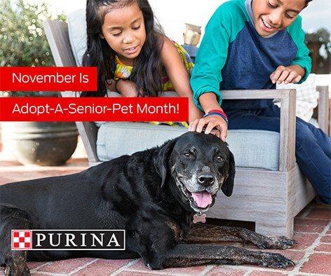 Adopt a Senior Pet in November
