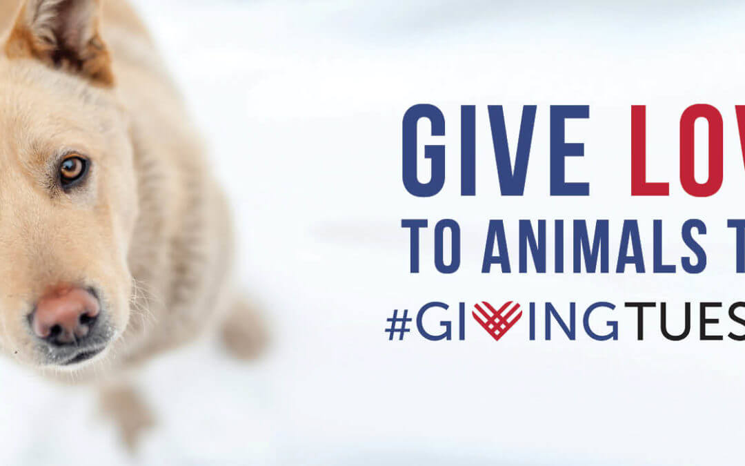 Giving Tuesday – Meet Dogs at Campus Martius