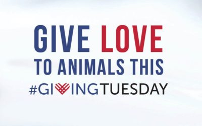 Facebook is Matching Giving Tuesday Donations Up to $7 Million