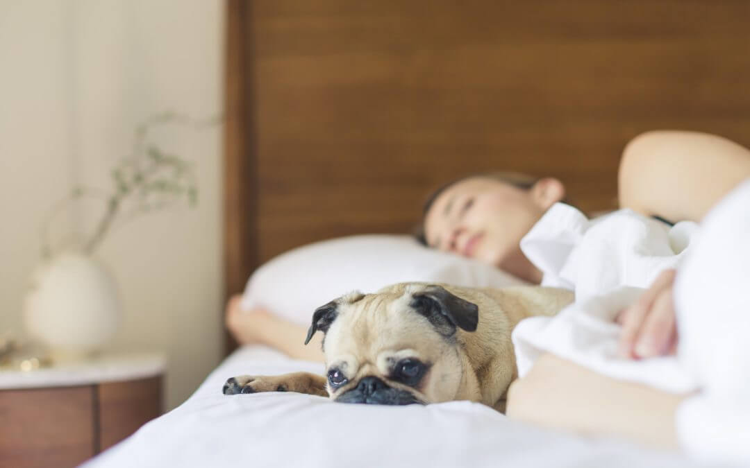 Dogs Help Women Sleep Better Than Humans