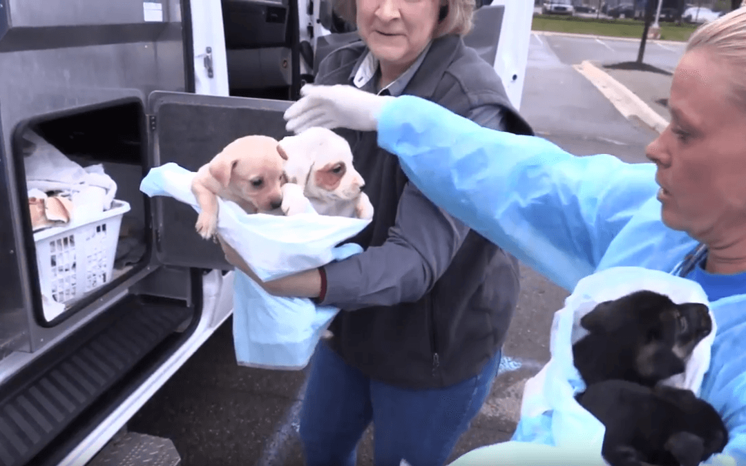 The Kibble: Animals Saved From Hurricane's Path