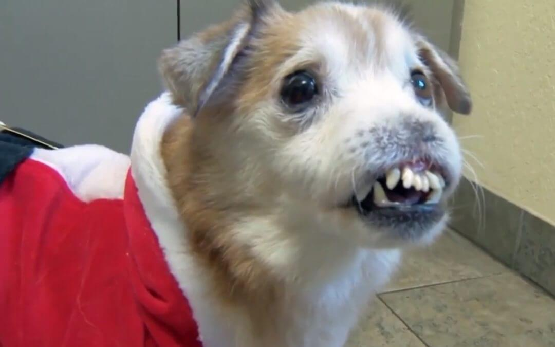 Sniffles is a Dog Without a Nose Looking for a Home