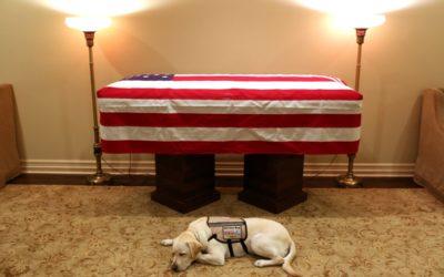 George H.W. Bush's Service Dog Laid Next to Casket