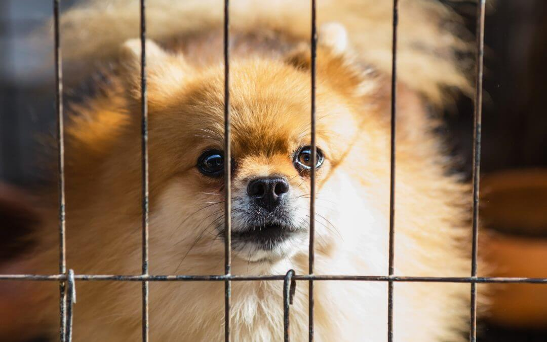 Royal Oak Banning Pet Stores From Selling Dogs, Cats