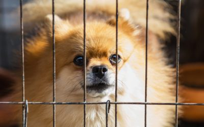 Lame Ducks and Puppy Mills – A Legislative Update