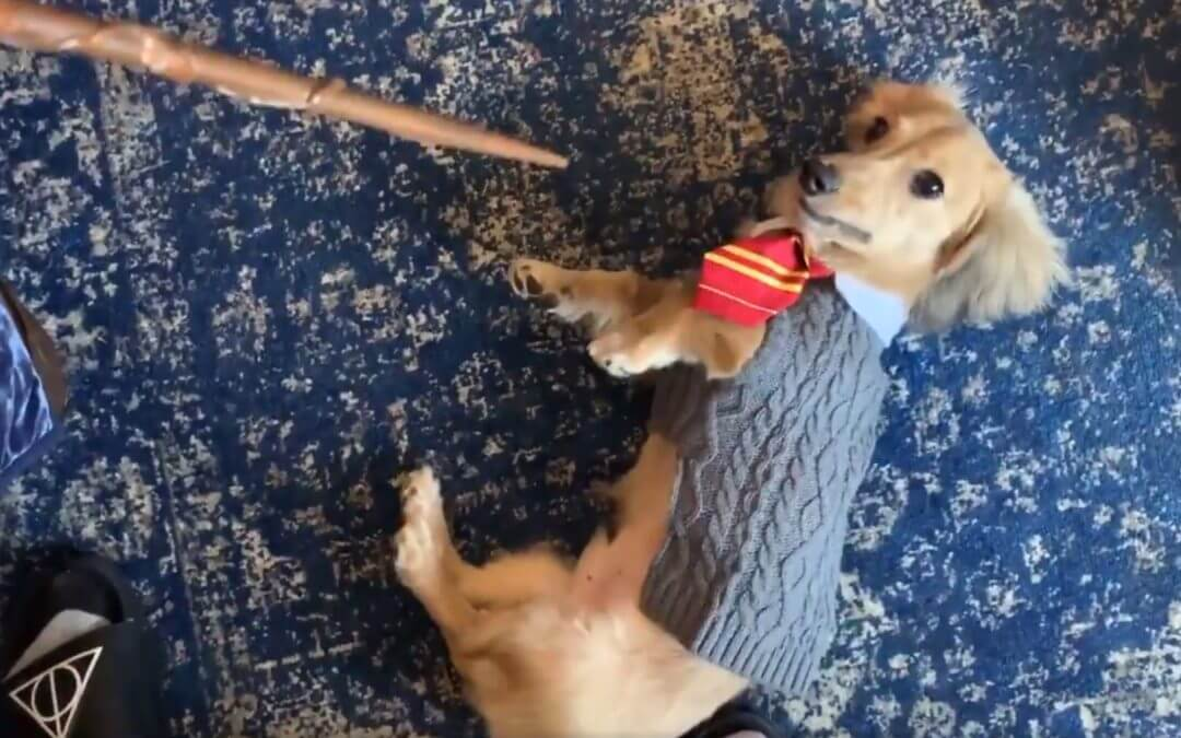 Woman Gives Her Dog Commands in Harry Potter Spells