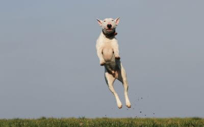 How to Teach Your Dog to Stop Jumping