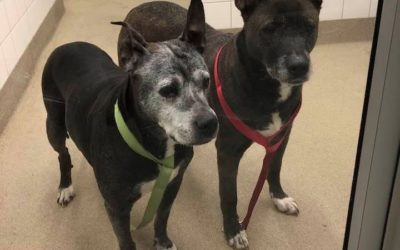 Pair of Senior Dogs Abandoned at Allen Park Petco