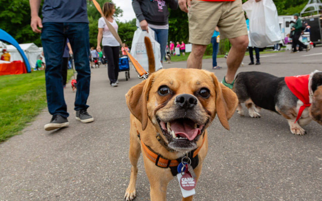 2019 Mutt March Presented by Sellers Subaru