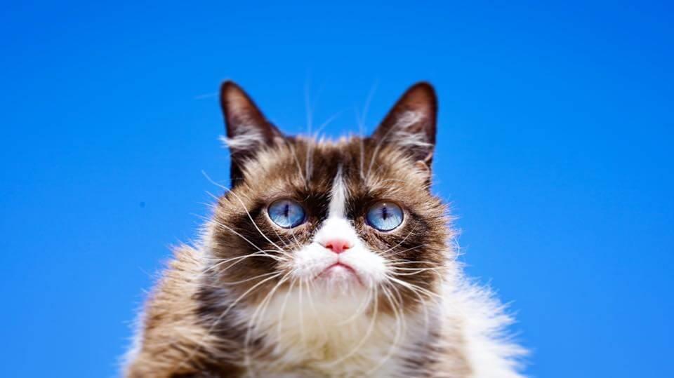 Viral Star Grumpy Cat Has Died