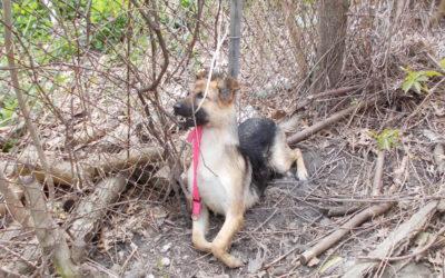 German Shepherd Found Shot to Death in Detroit, $2500 Reward Offered for Leads