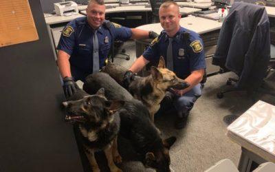 Three German Shepherds Found Along Lodge Freeway in Detroit