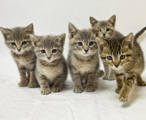A litter of kittens.