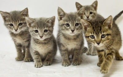 Join Us for the 2019 Michigan Humane Kitten Shower