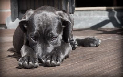 Your Stress Can Stress Out Your Dog According to Study