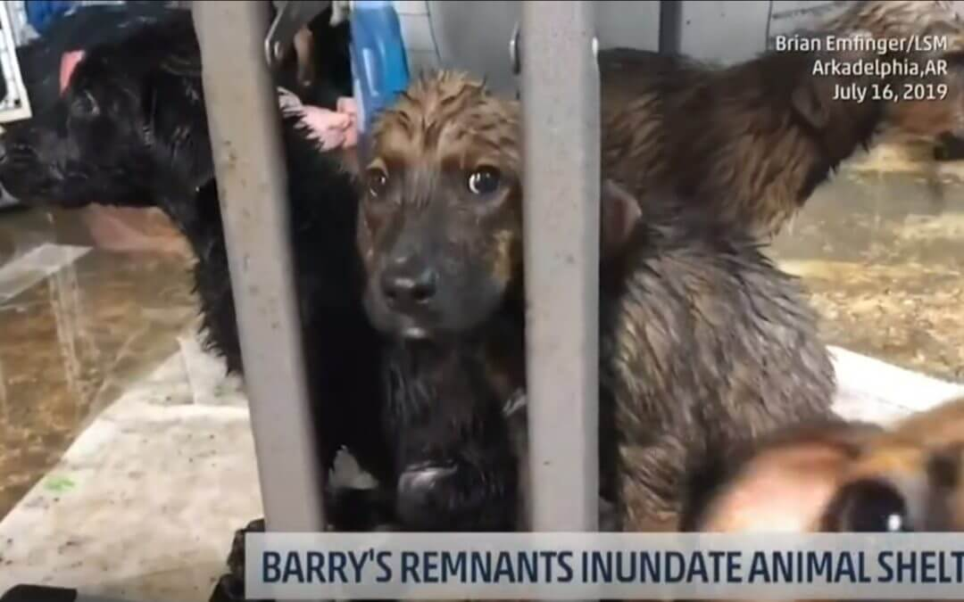 Shelter Forced to Evacuate Animals After Hurricane Barry Flooding
