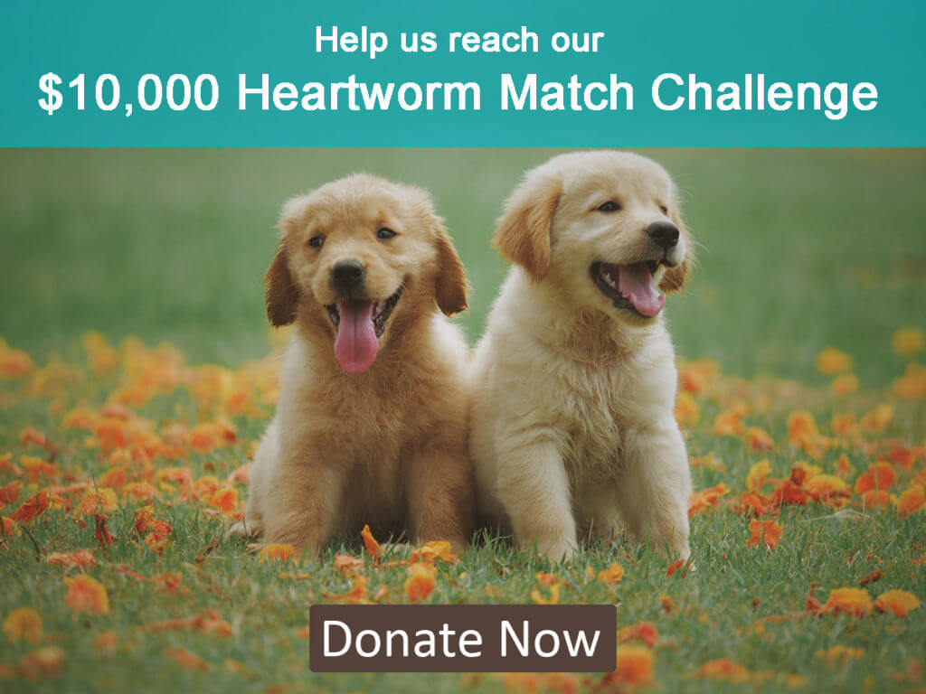 MHS Heartworm Match Challenge