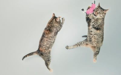 Michigan Lawmakers Introduce Bill to Ban Cat Declawing