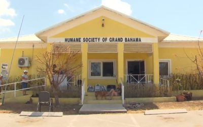 220 Dogs, 50 Cats Drown From Dorian Flooding at Humane Society in Bahamas