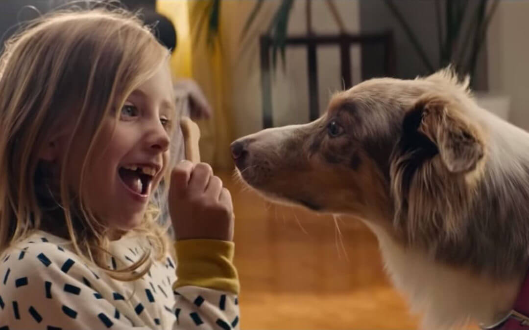 Watch the Emotional Story of Two Dogs Reunited in IKEA Commercial