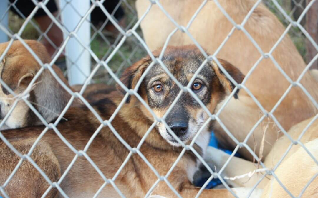 Proposed Bill Would Regulate Rescues And Protect Animals