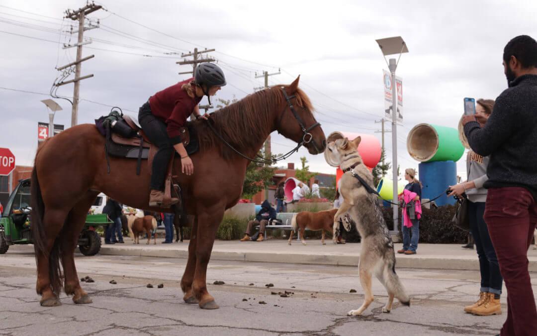 [Photos] First Ever Giddy Up Pup Strolls Through Detroit
