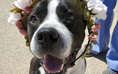 Meet 5 Underdogs at MHS on Subaru's Make A Dog's Day