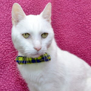 Robert Van Winkle the cat.