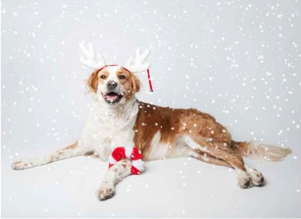 2019 MHS Holiday Card dog