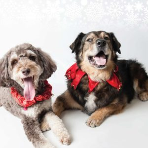 MHS 2019 holiday cards two dogs
